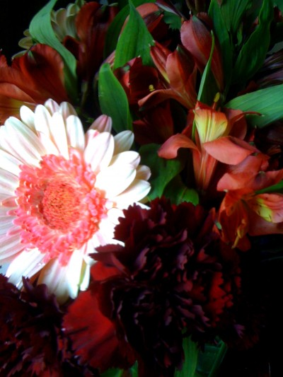 unfolding the petals