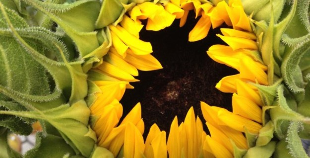 cropped-cropped-969124_10153083080660514_931744804_n.jpg