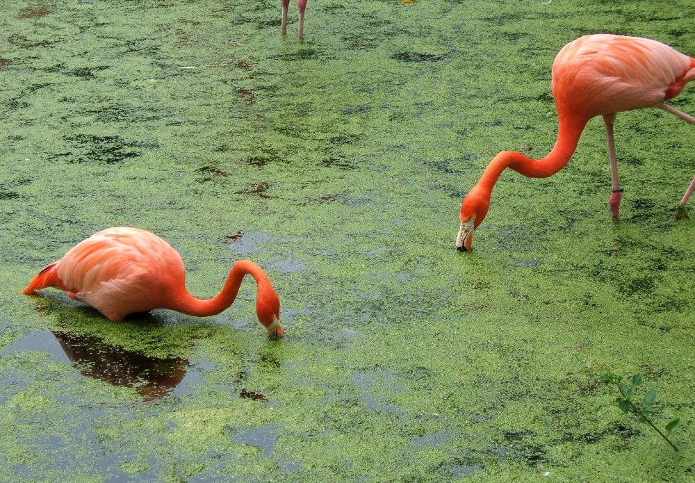 flamingos 2006